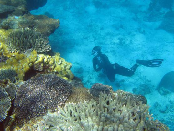 A snorkel diver swiming amongst the corals of australias great barrier reef